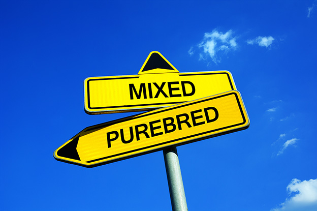 Mixed or Purebred - Traffic sign with two options - pure-blooded